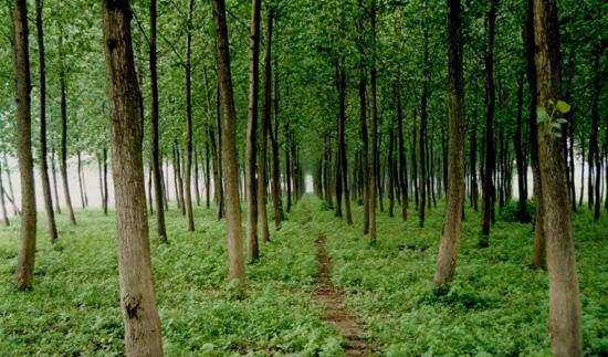 水保林和核心区防护林